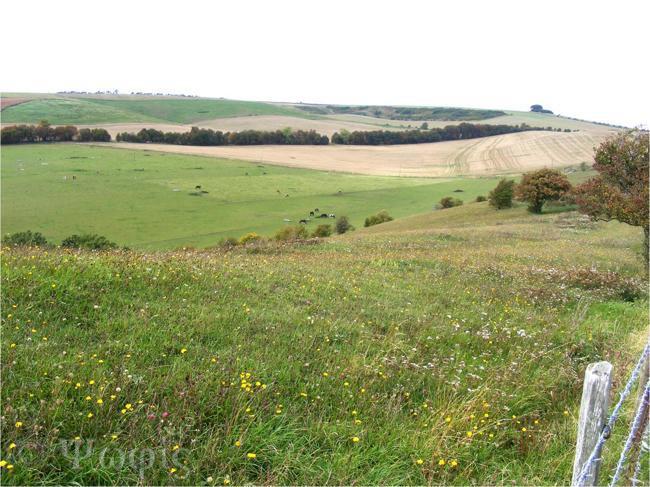 ridgeway,chalk meadow