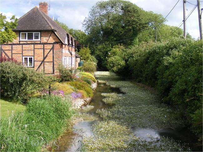 chalk stream,East Garston