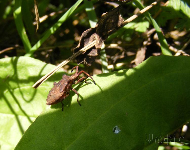 bug,weevil