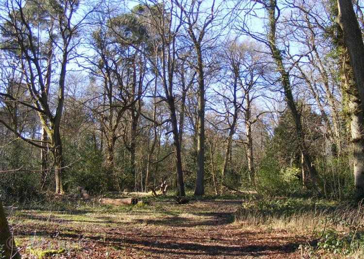 Ashampstead Common