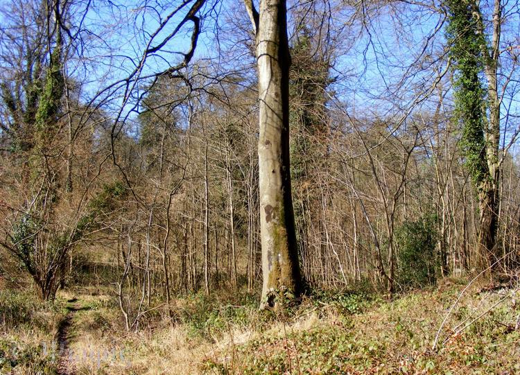 Ashampstead Common,woods