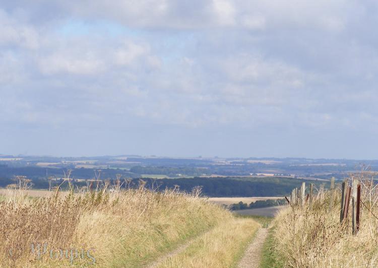 tidcombe view