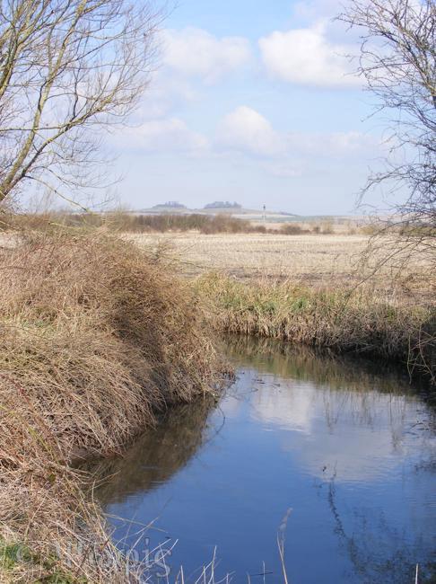Wittenham clumps view