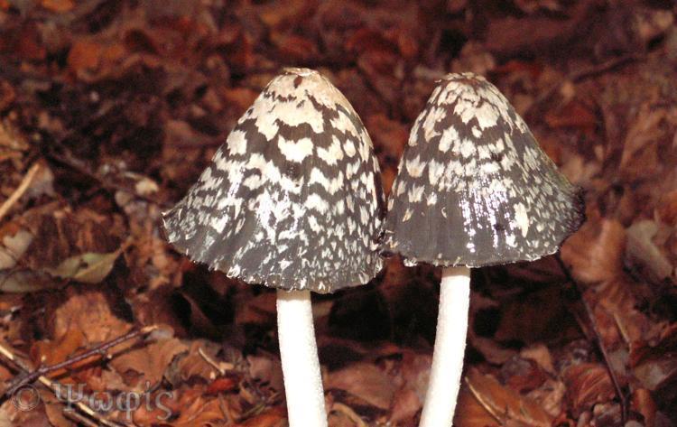 fungi,toadstool,mushroom