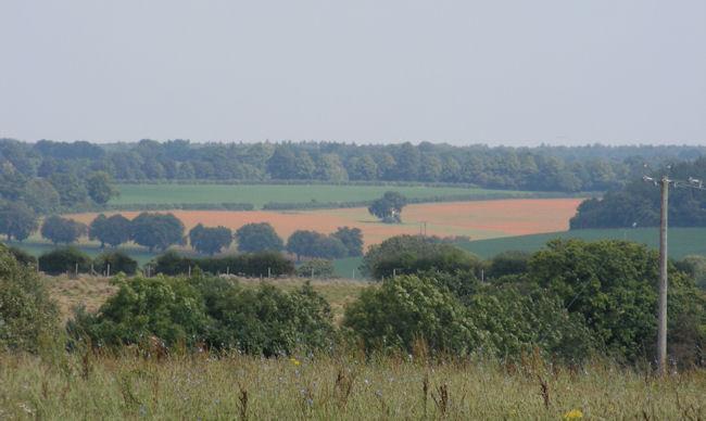 poppy,field