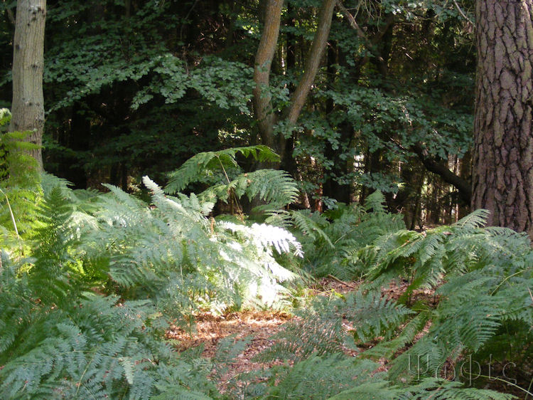 Hermitage,woodland