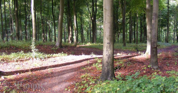 West wood,Fyfield wood