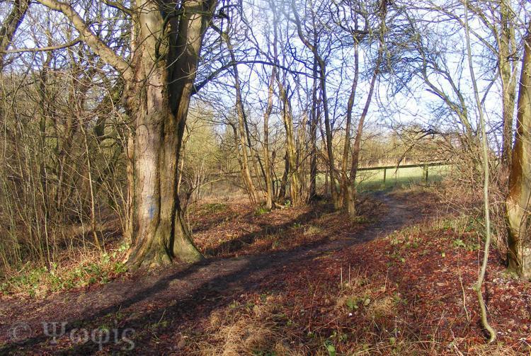 Lynch Wood