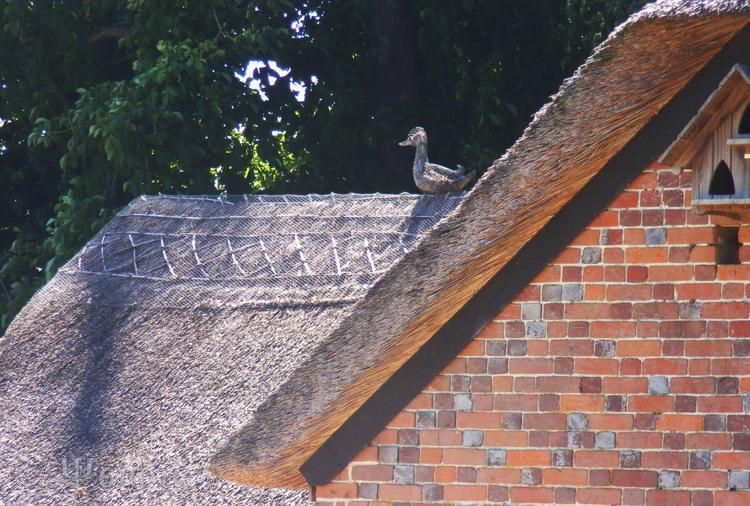 thatched house,duck