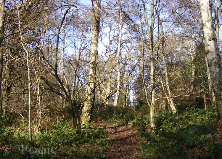 Hermitage,woods