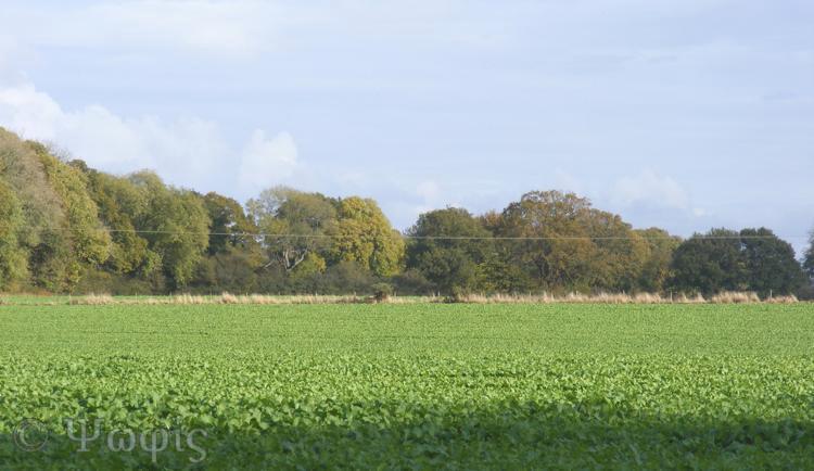 lost footpath,fields