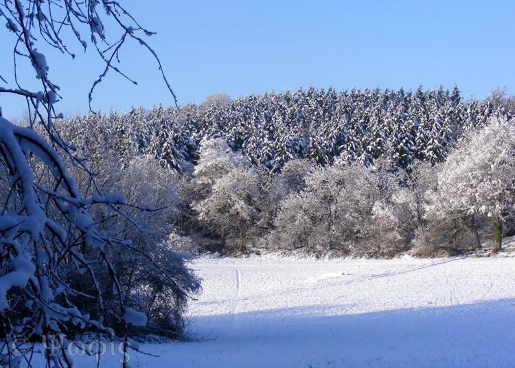 snow,woods