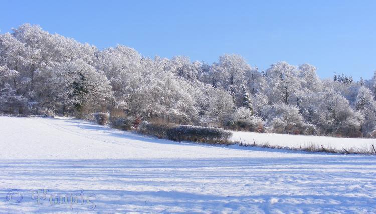 snow,trees