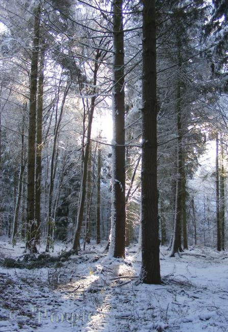 snow,woods,sulham