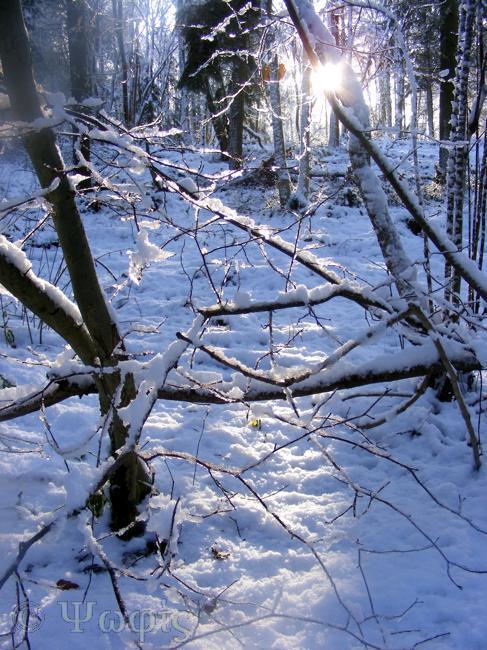 snow,sun,woods