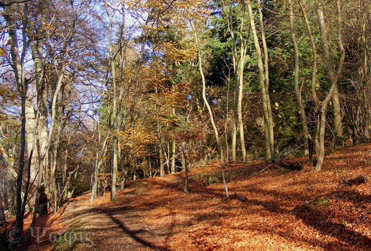 Sulham Woods