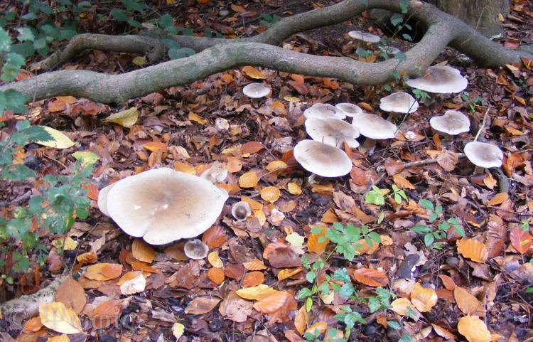 sulham woods,fungi