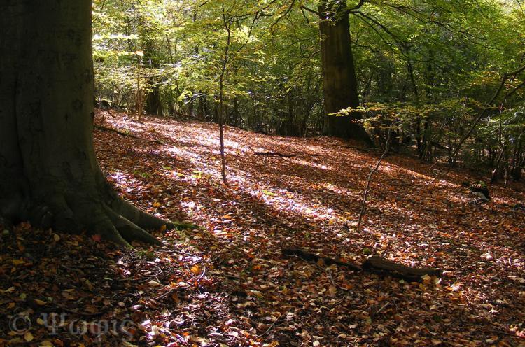 sulham woods,woods