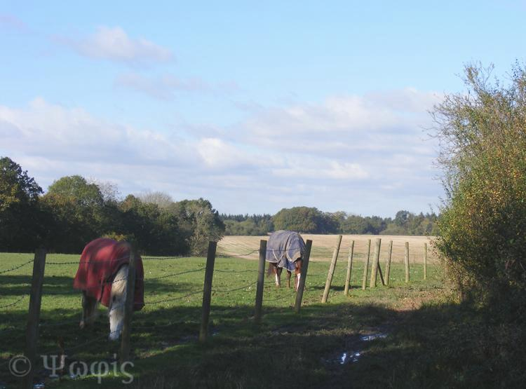 sulham woods,horses