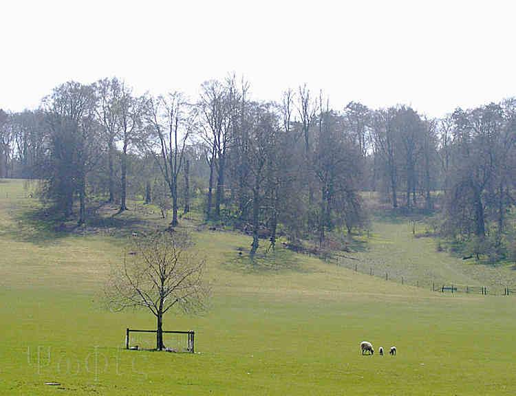 Swyncombe park