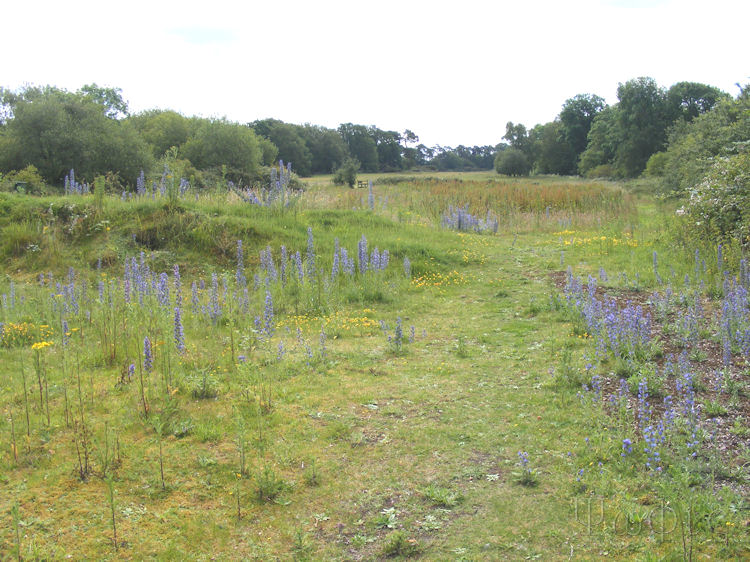 Boxford Common