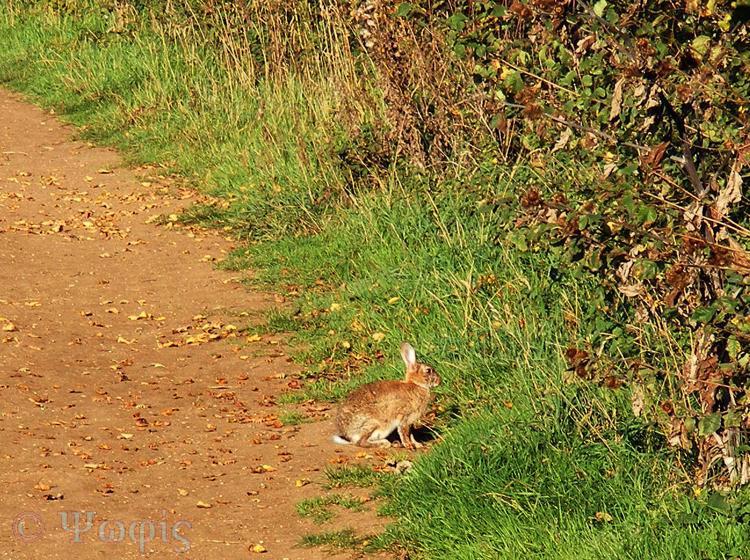rabbit,bunny