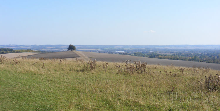 wittenham clumps,view
