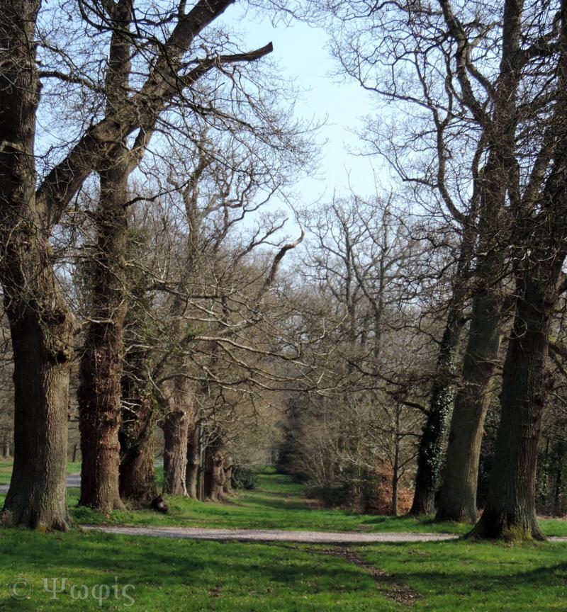 tree avenue,Bucklebury Common