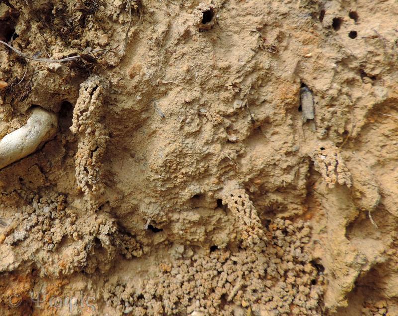 Mining wasp tubes