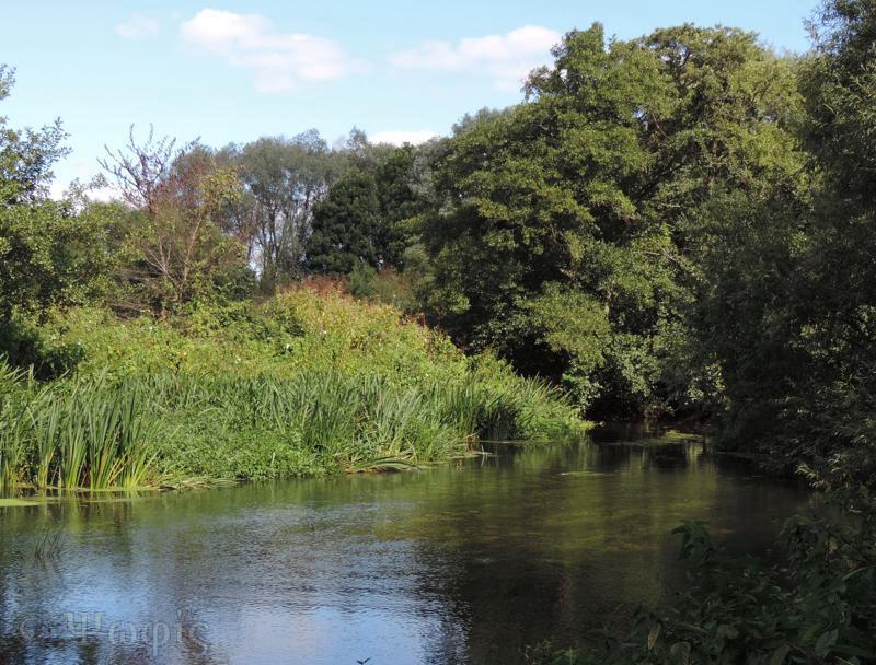 River Loddon