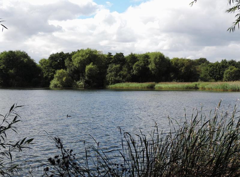 white swan lake,dinton pastures