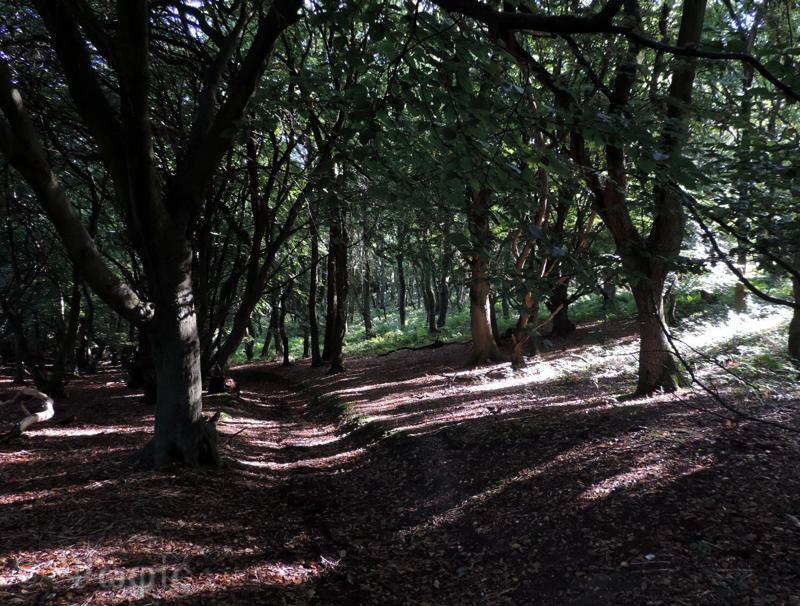 pishill bottom woods
